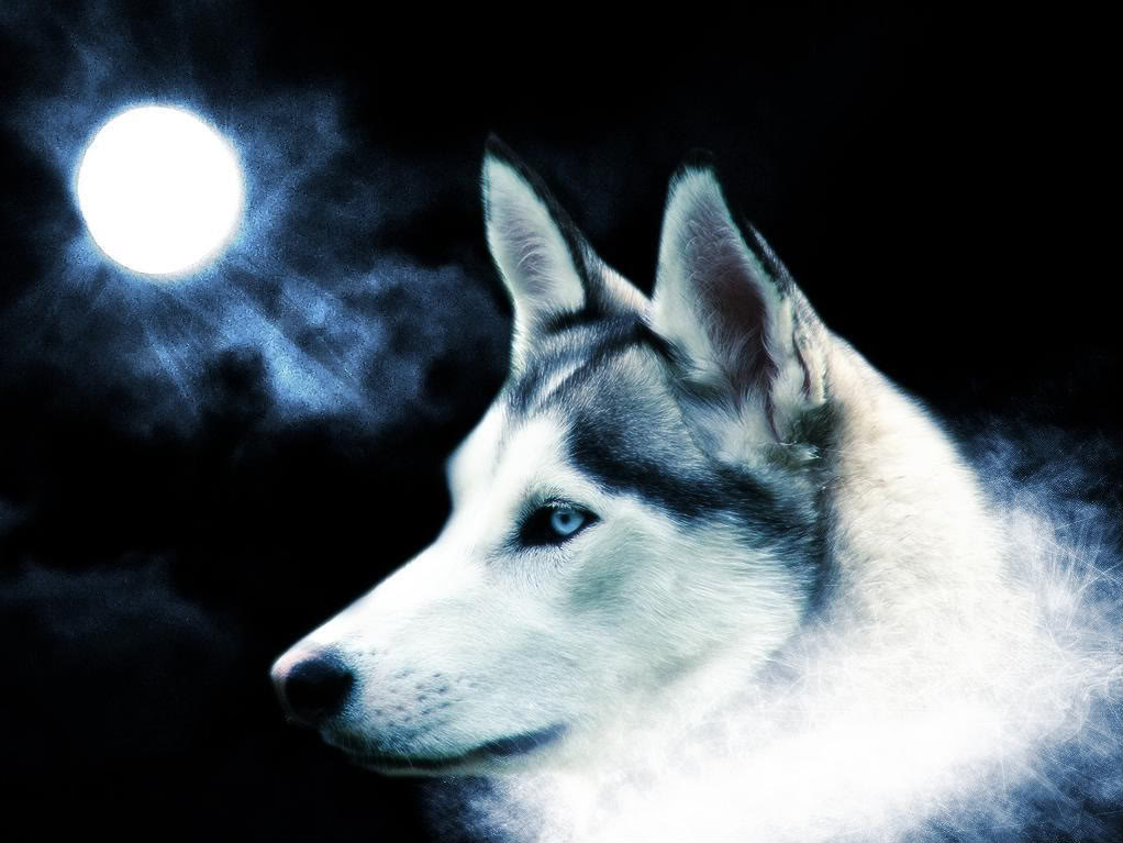 Live Wolf Wallpaper Free Download For PC
