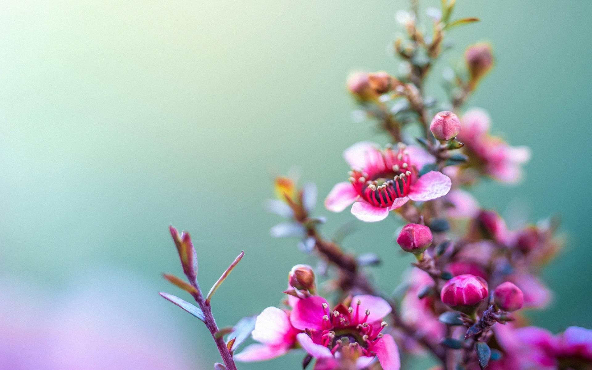 Spring Flower Wallpaper For Desktop Download Of 1920x1200