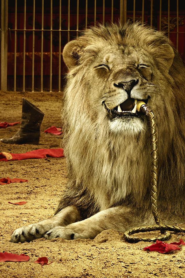 Lion Phone Wallpaper - WallpaperSafari