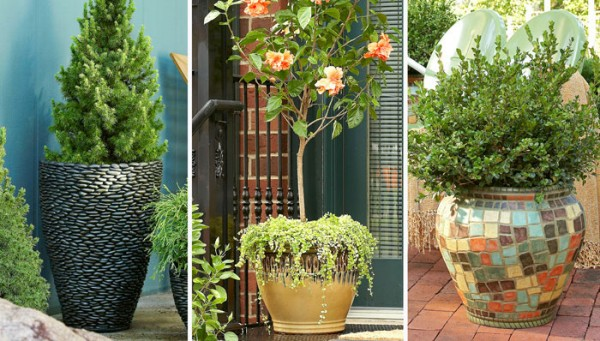 Fine Looking Potted Trees Shrubs Offer 424992 Home Design Ideas 600x341