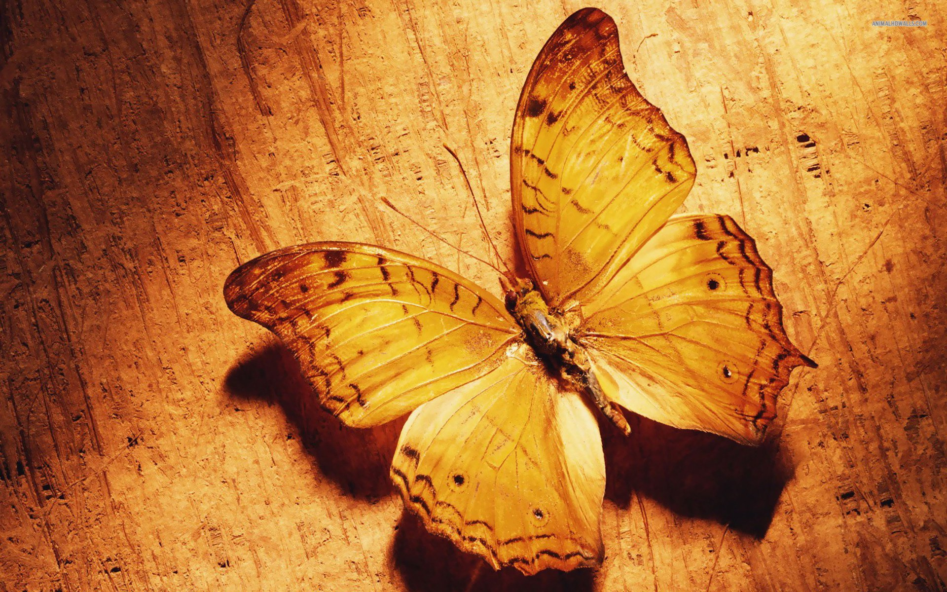 butterfly cute backgrounds wallpaper animals 1920x1200 1920x1200