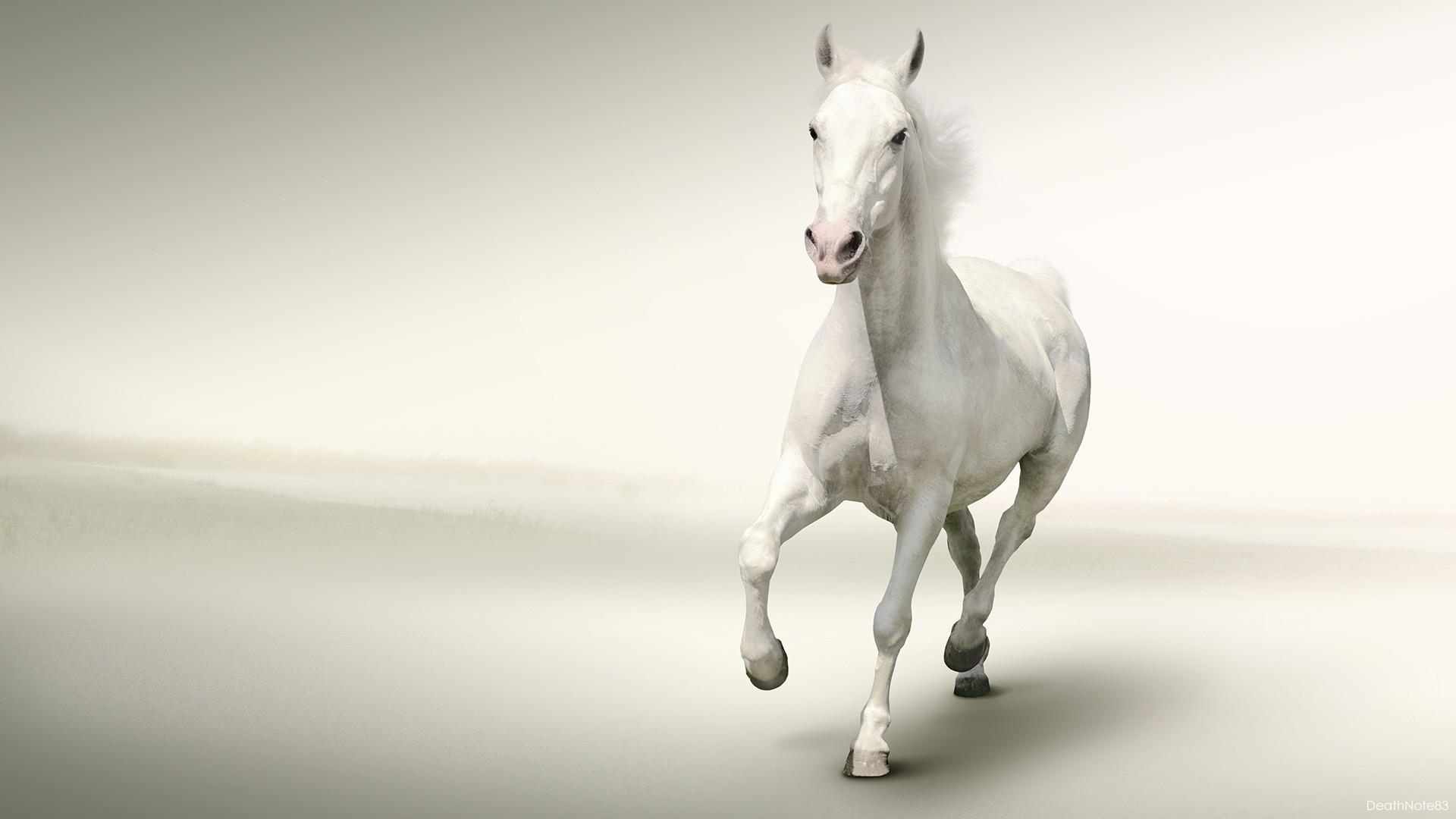 Hd wallpaper white background - White Horse Running White Background Hd Wallpaper Wallsev Com