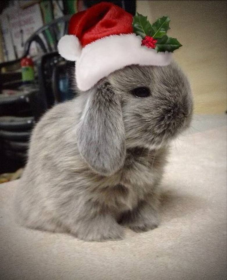 Free Download And Here Is A Bunny Claus I Love Animals Pinterest