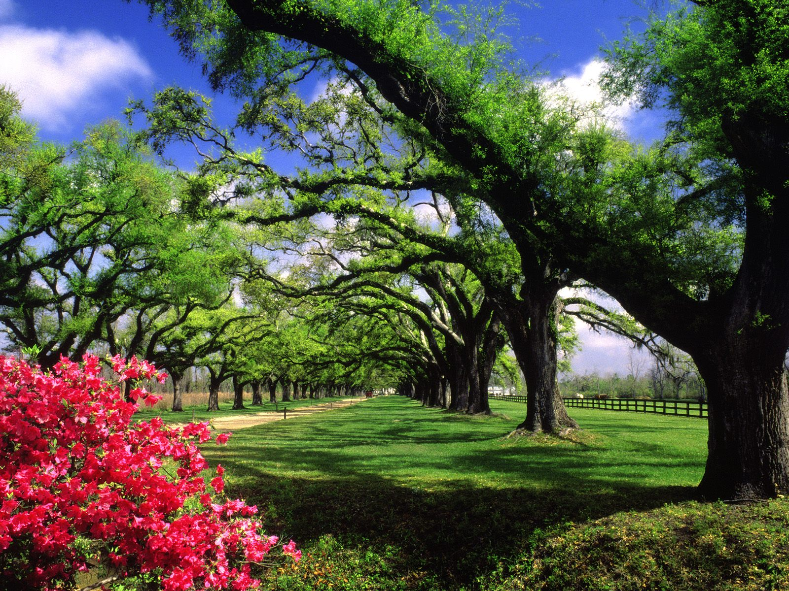 wallpapers boone hall plantation south carolina tags tree south 1600x1200