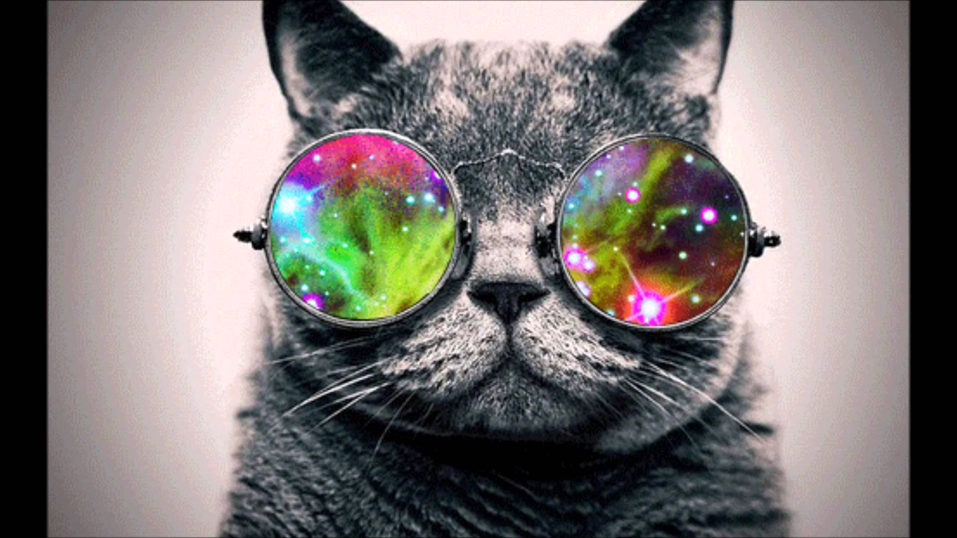 Cat with Glasses Wallpaper 1920x1080