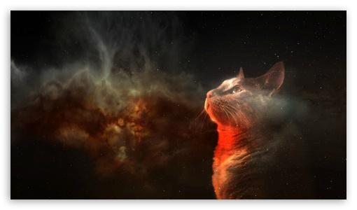 Cats Space HD wallpaper for HD 169 High Definition WQHD QWXGA 1080p 510x300