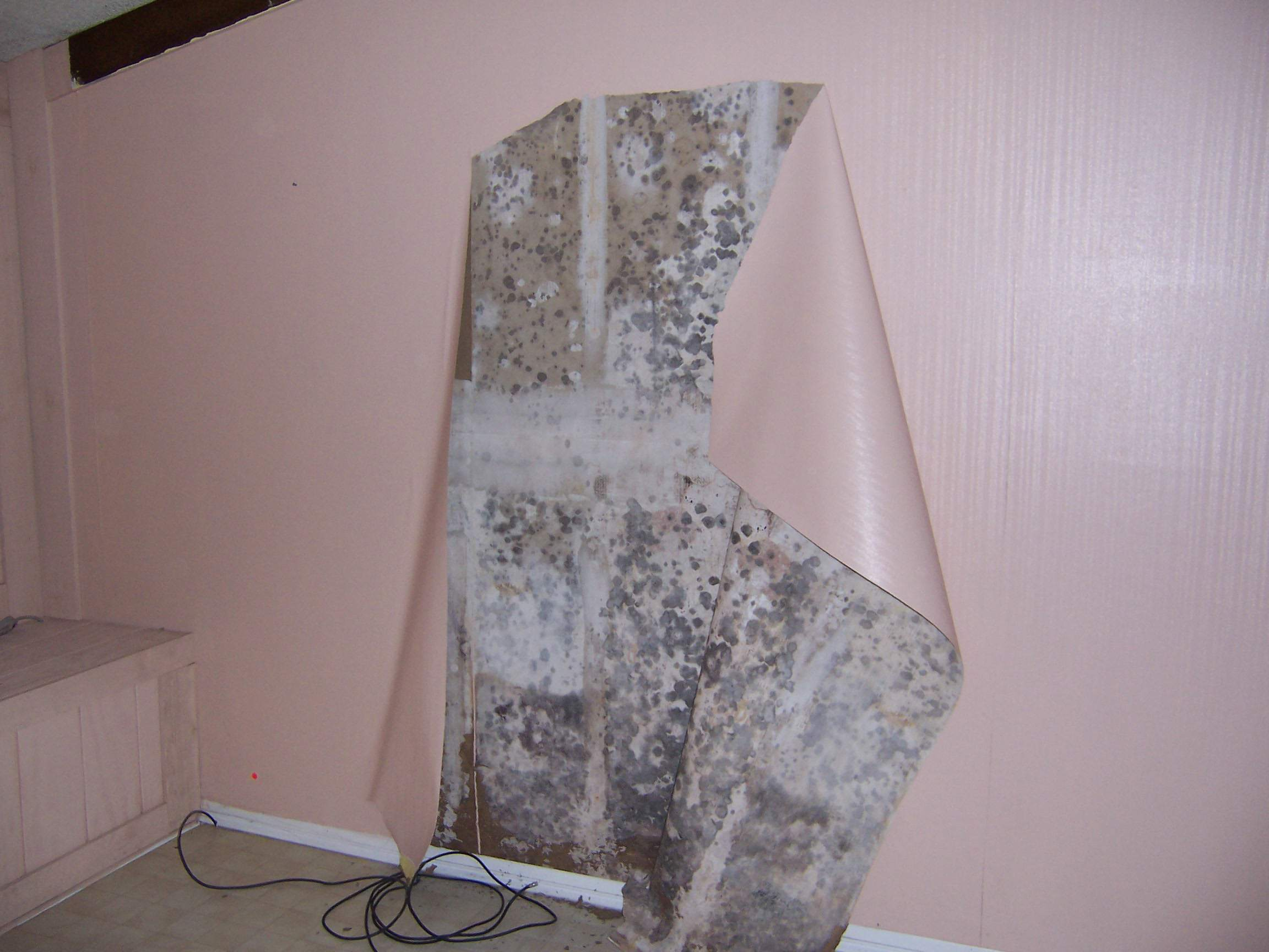 How do you remove mold from bathroom walls - Best Way To Remove Black Mold From Walls Phoenix
