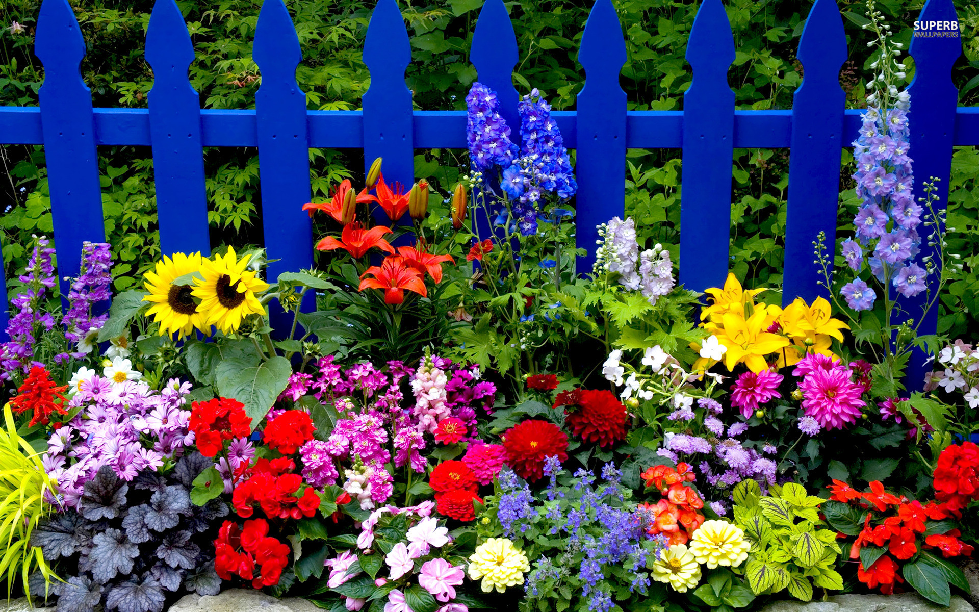 Summer Flowers wallpaper 1920x1200 71955 WallpaperUP 1920x1200