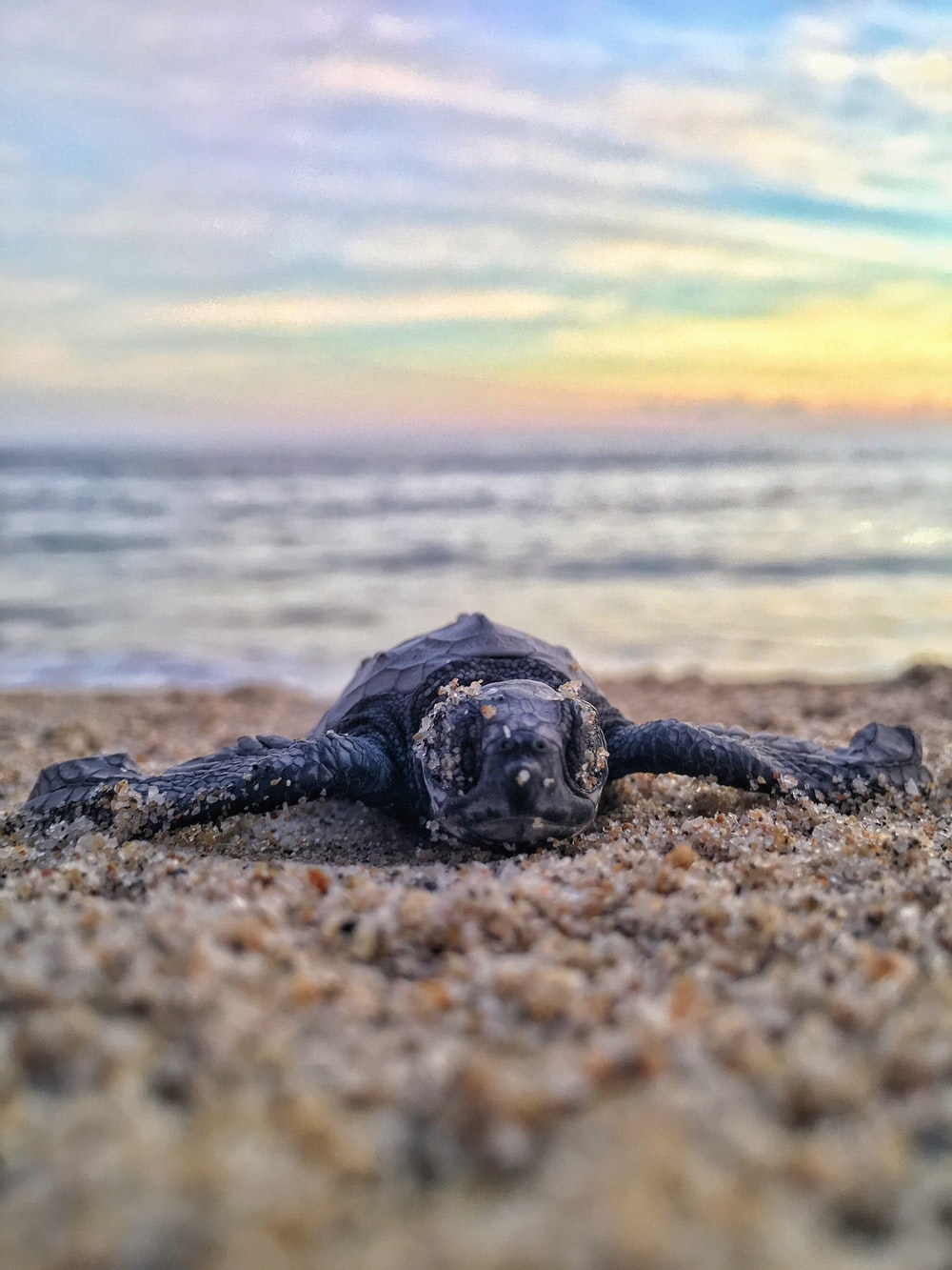 500 Baby Sea Turtle Pictures [HD] Download Images on Unsplash 1000x1333