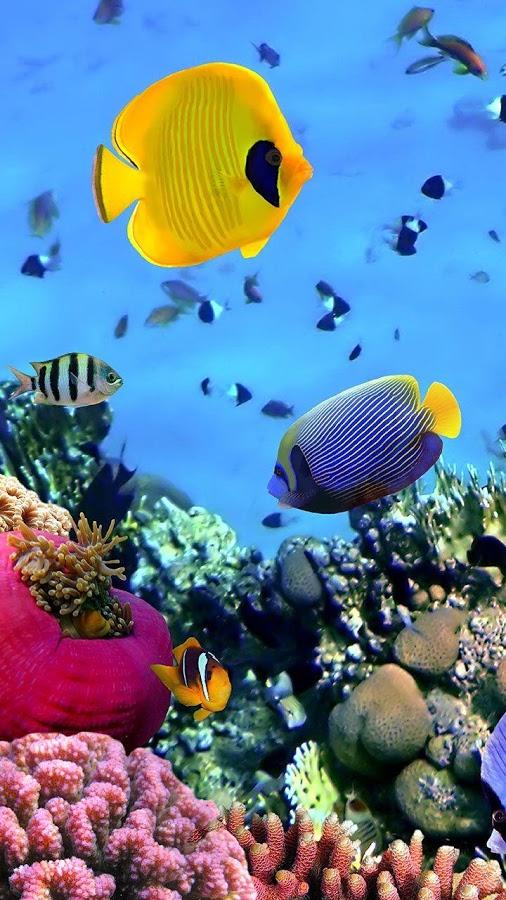 50 Live Ocean Wallpaper On Wallpapersafari