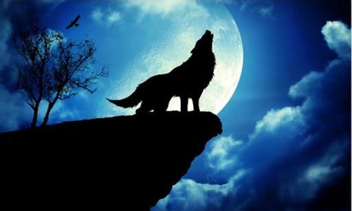 live wolf wallpaper app