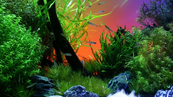 Fish Tank fish tank Fish Wallpapers Desktop Wallpapers 600x337