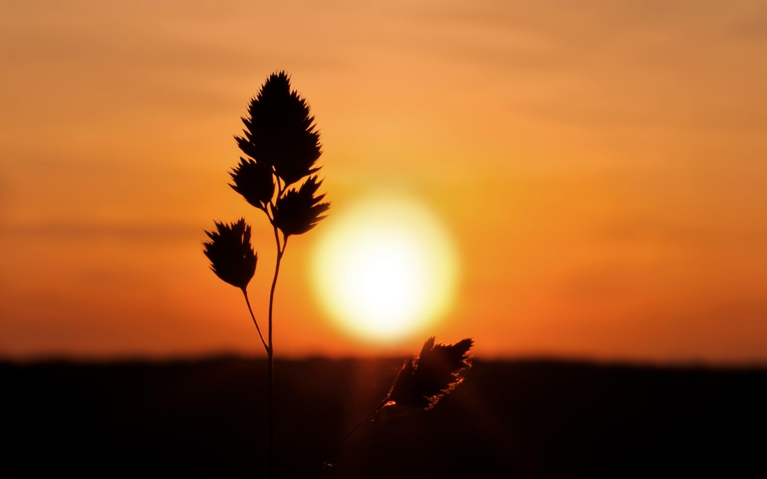 Sunsets sunrise landscapes nature 2560x1600