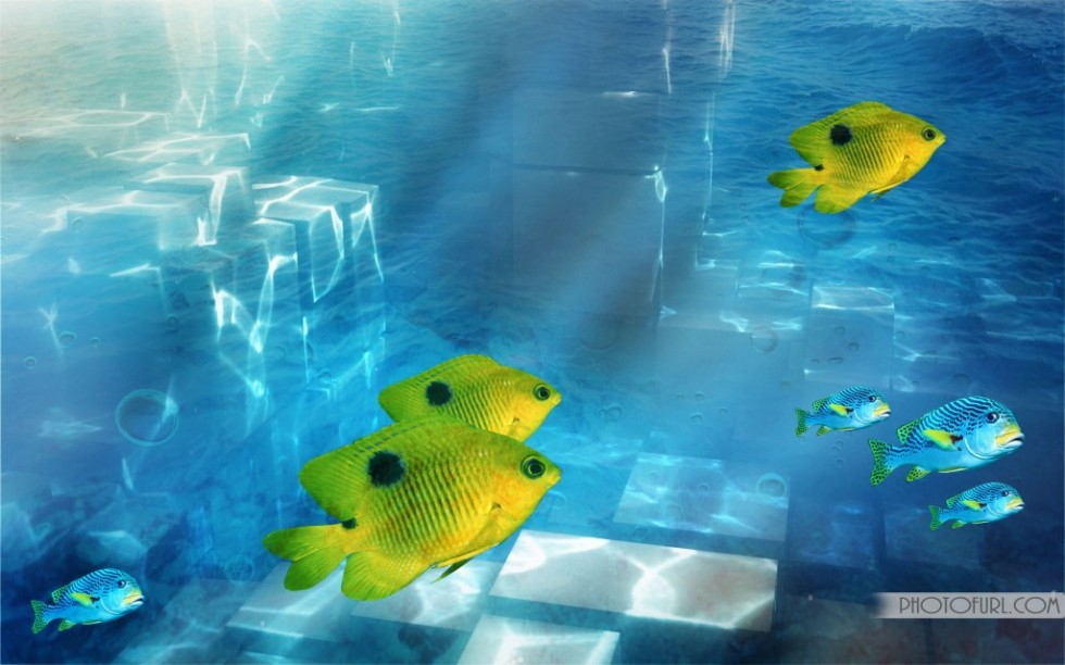 Cool Fishing Backgrounds to Set This Cool Yellow Fish 980x612