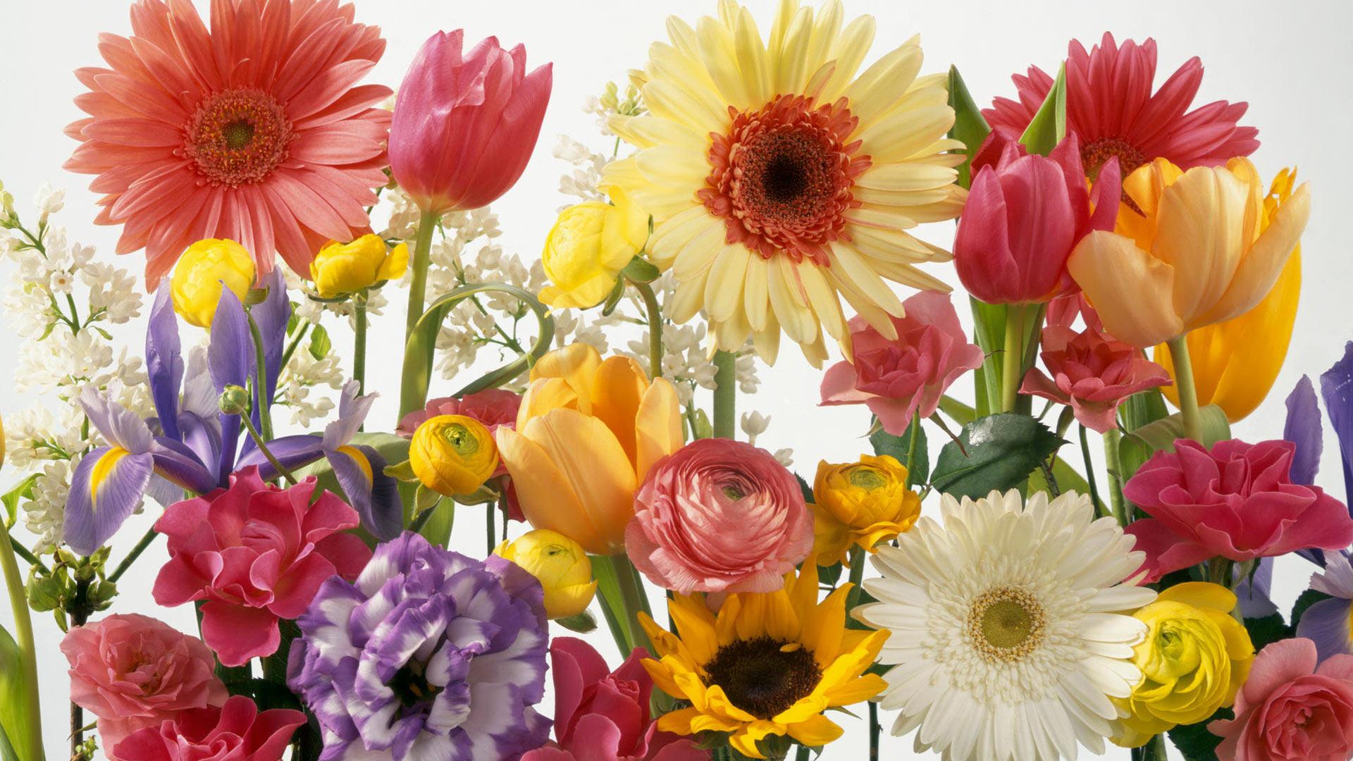 Desktop Wallpaper Spring Flowers 1920x1080