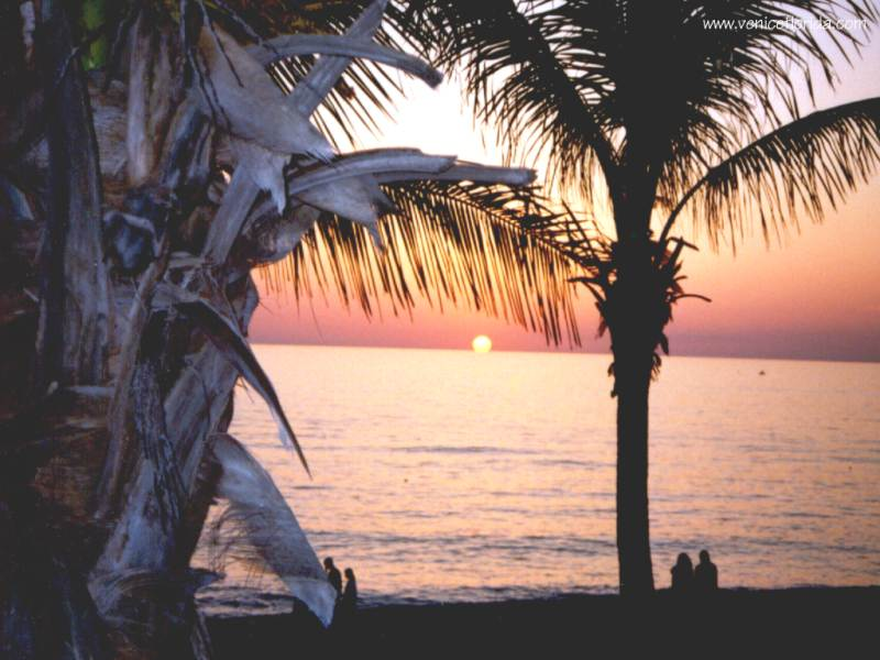 Venice Florida   Desktop Wallpapers 800x600