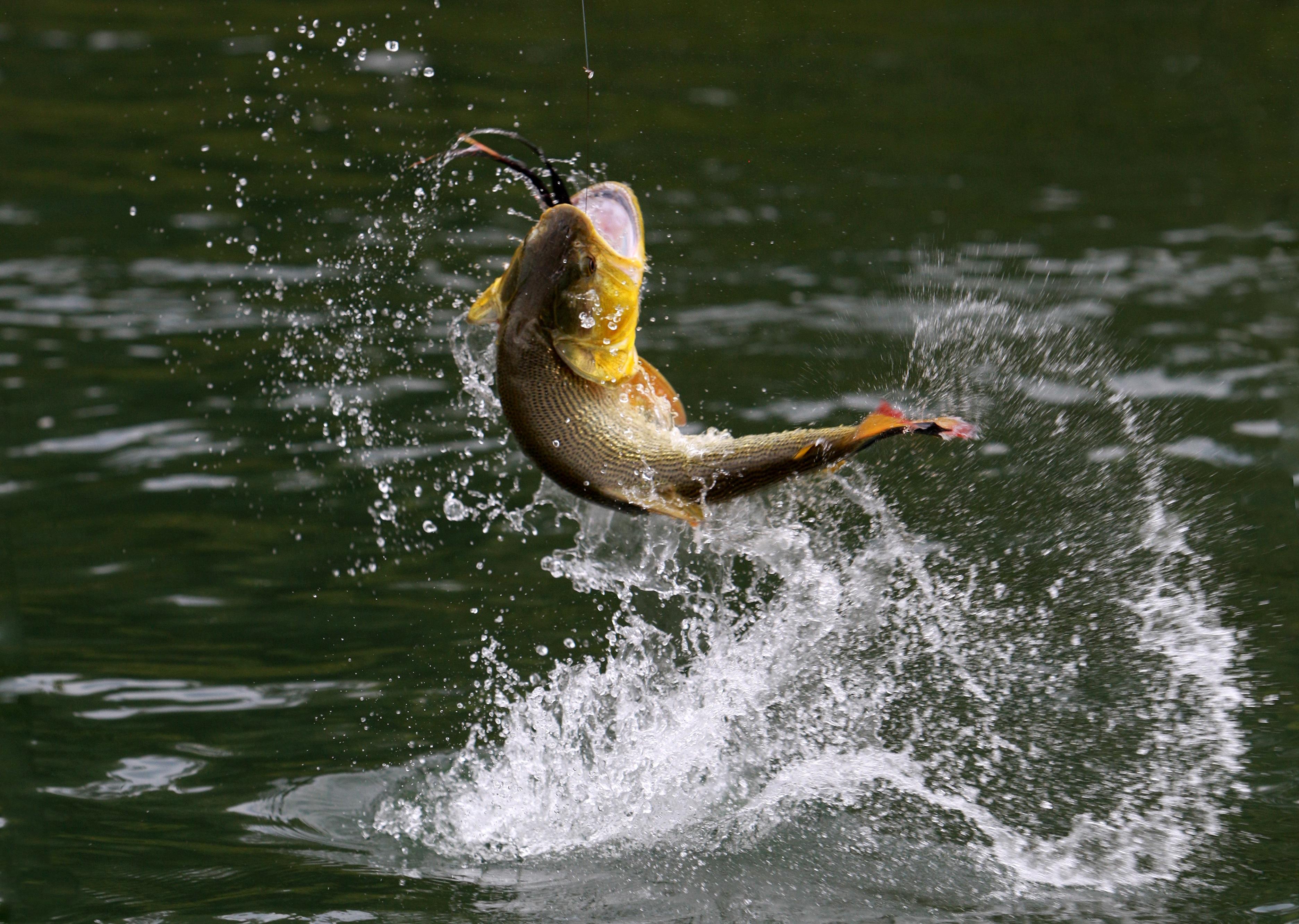 bass fish fishing drops g wallpaper background 3744x2664