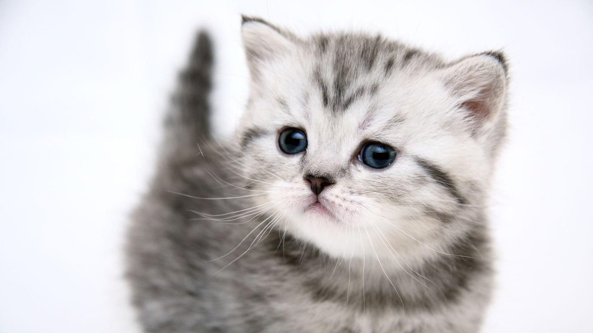 котенок дымчатый kitten smoky  № 2344434 загрузить