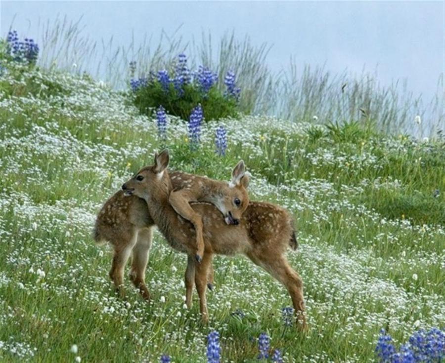 Deer wallpapers hd 900x735
