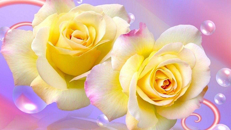 Free Yellow Rose Wallpaper