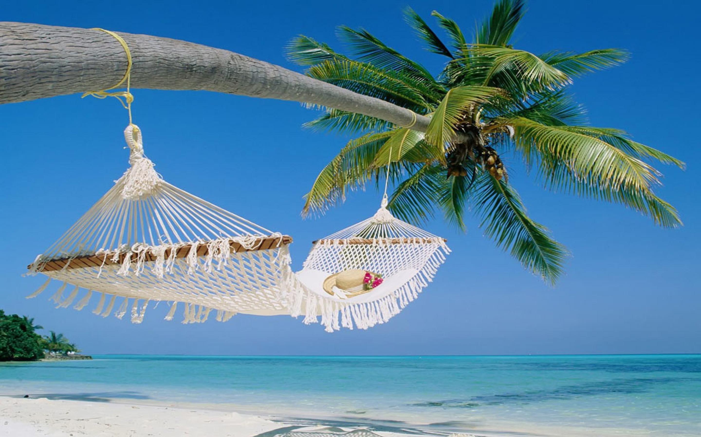 Maldives Tropical Beach Palm Tree with Hammock Wallpaper in High 2880x1800
