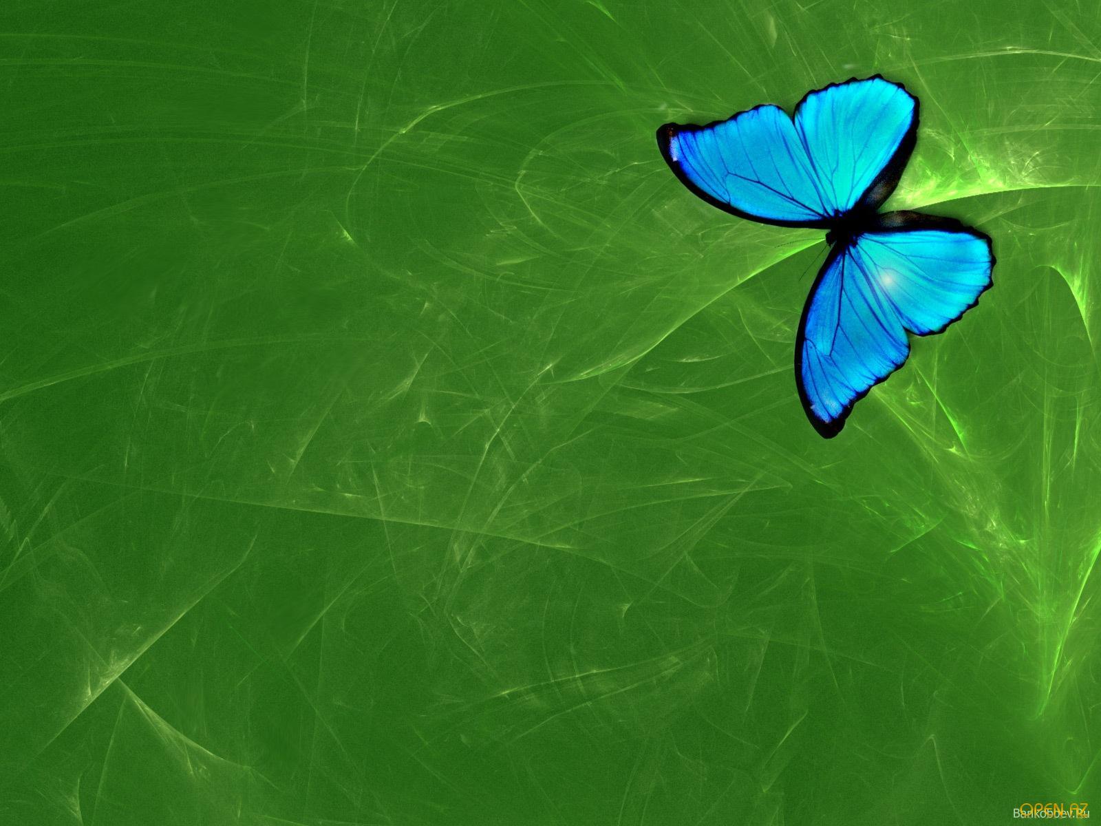 бабочка на зеленой траве  № 1396104 бесплатно