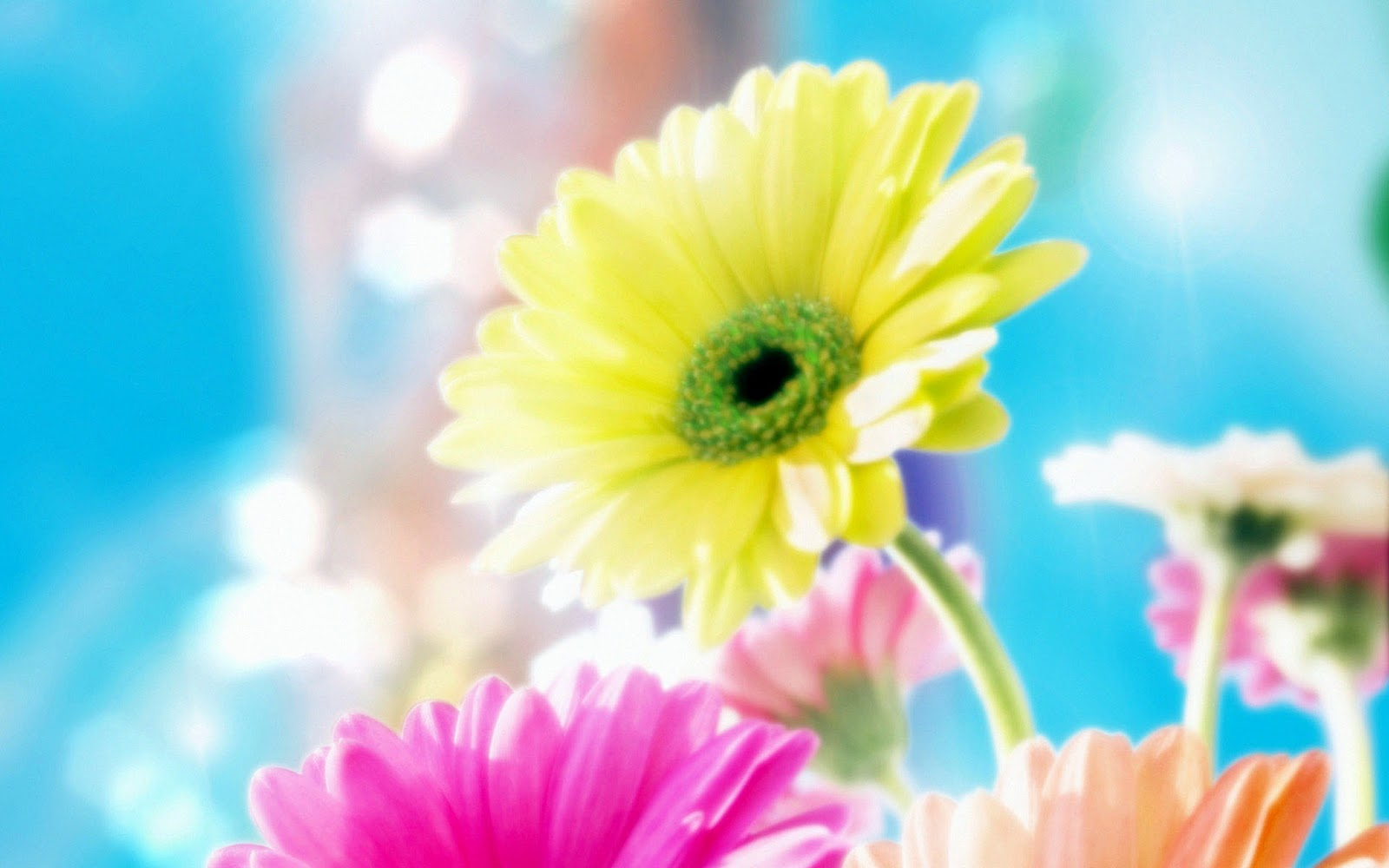 Download Best HD Wallpapers Most Beautiful Flower Wallpaper 1600x1000