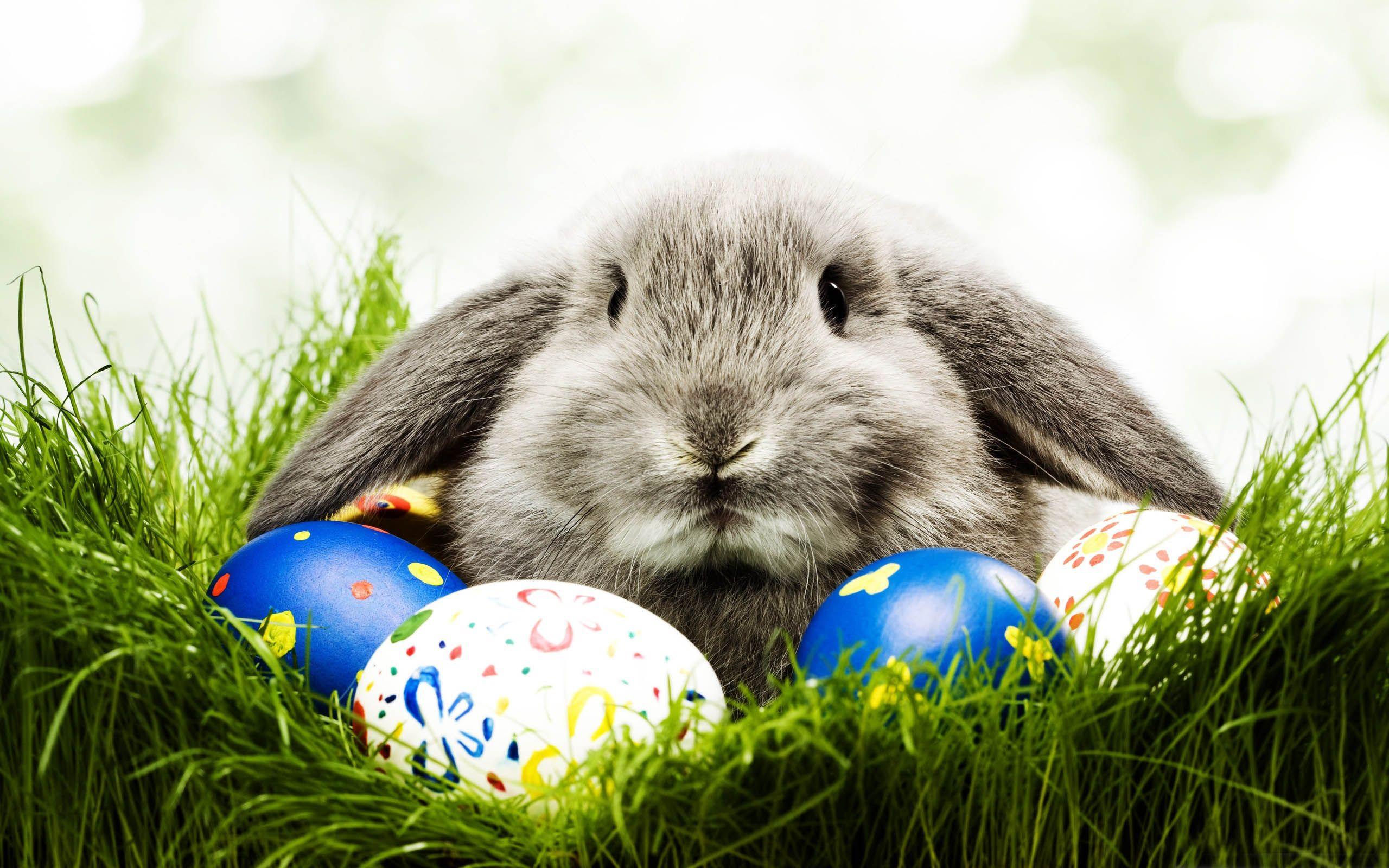 Easter Bunny Desktop Wallpaper HD 2560x1600