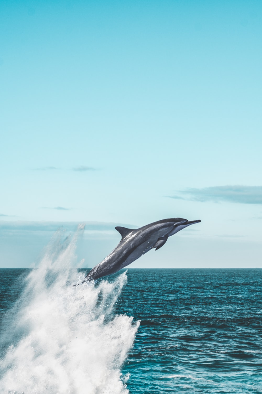 Dolphin Wallpapers HD Download [500 HQ] Unsplash 1000x1500