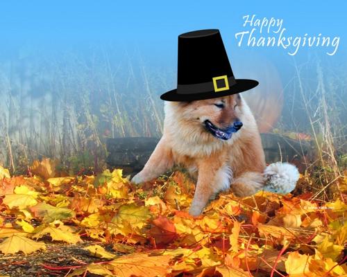 Thanksgiving Desktop Fun Wallpaper collection 2012 [Download 500x400