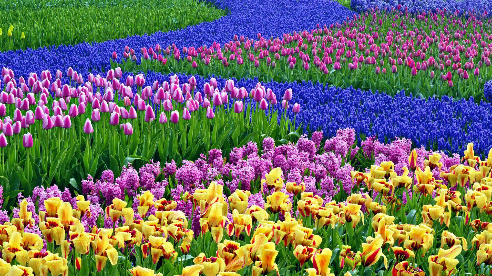 Spring Flowers Wallpaper Desktop Background Spring 1920x1080