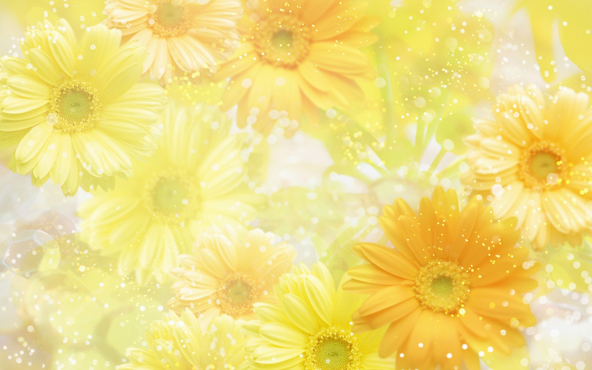 43 Yellow Floral Wallpaper On Wallpapersafari