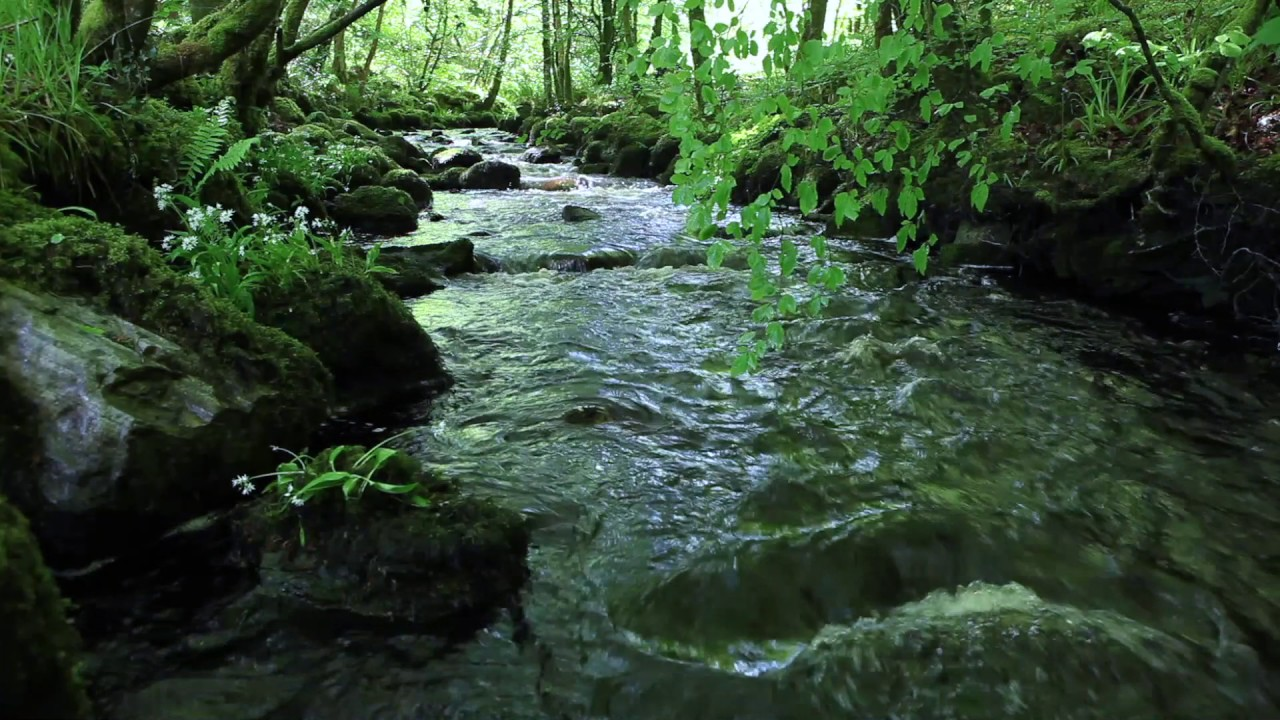 Nature Sounds of a Forest for Relaxing Natural Soothing Sound of a 1280x720