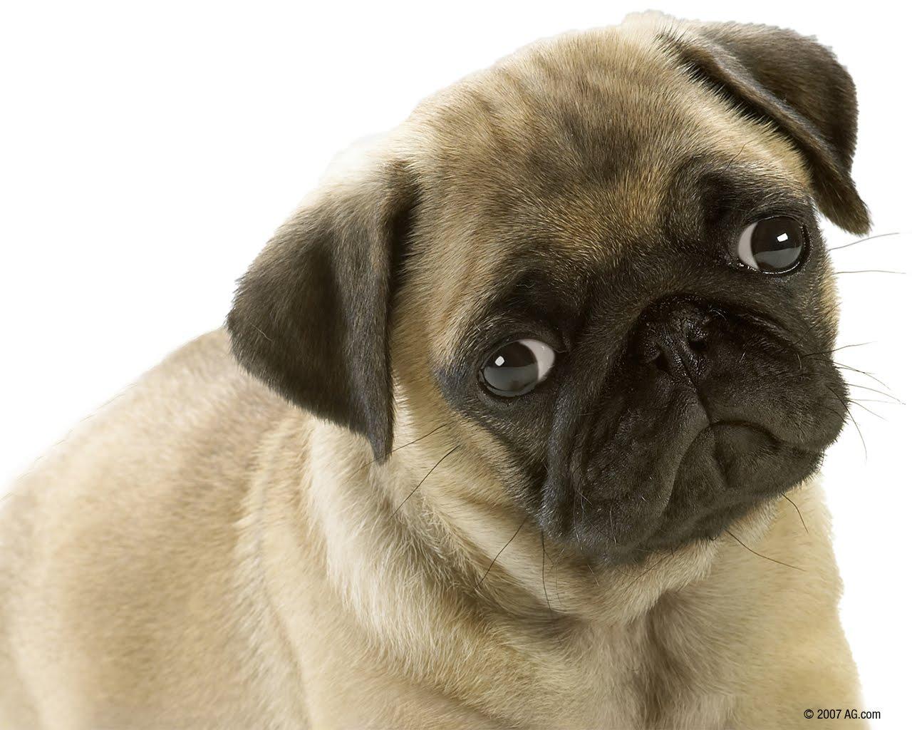 Cute Baby Puppies Wallpaper