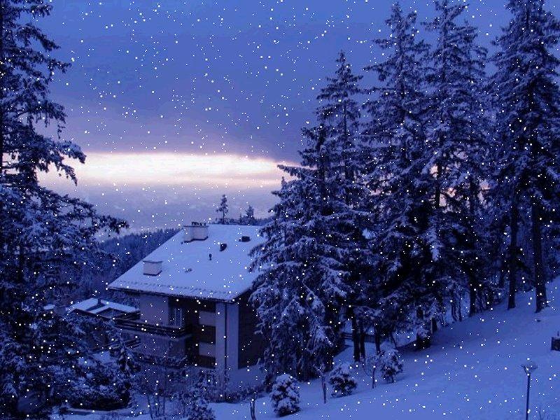 Amazing winter sceneryBeautiful scene of the snow fall Beautiful 800x600