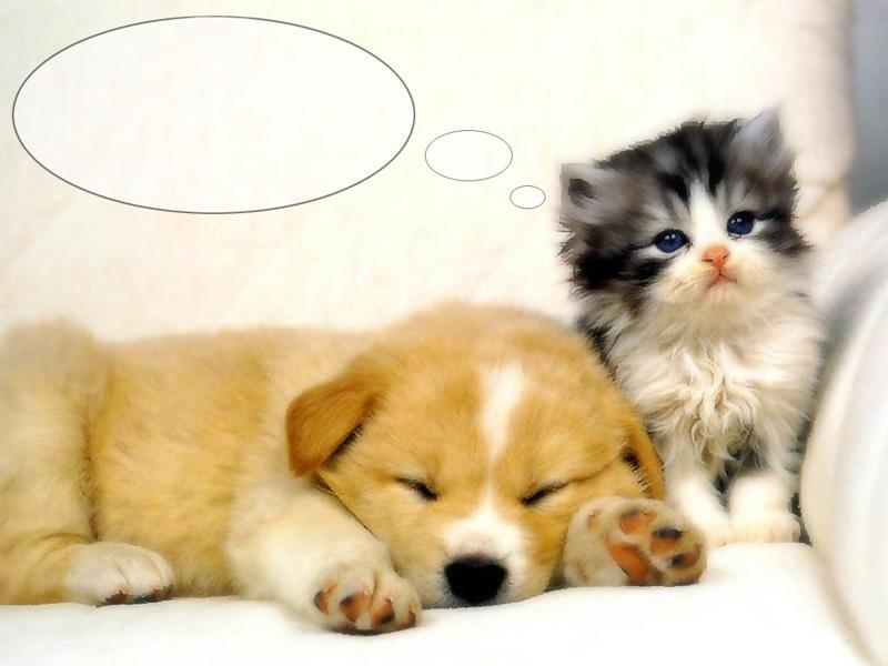 Hy Kitten Morning Cute Kittens A Puppies Es