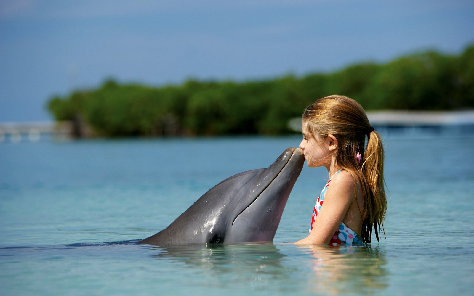Central Wallpaper Cute Dolphins HD Wallpapers Collection 1600x1000