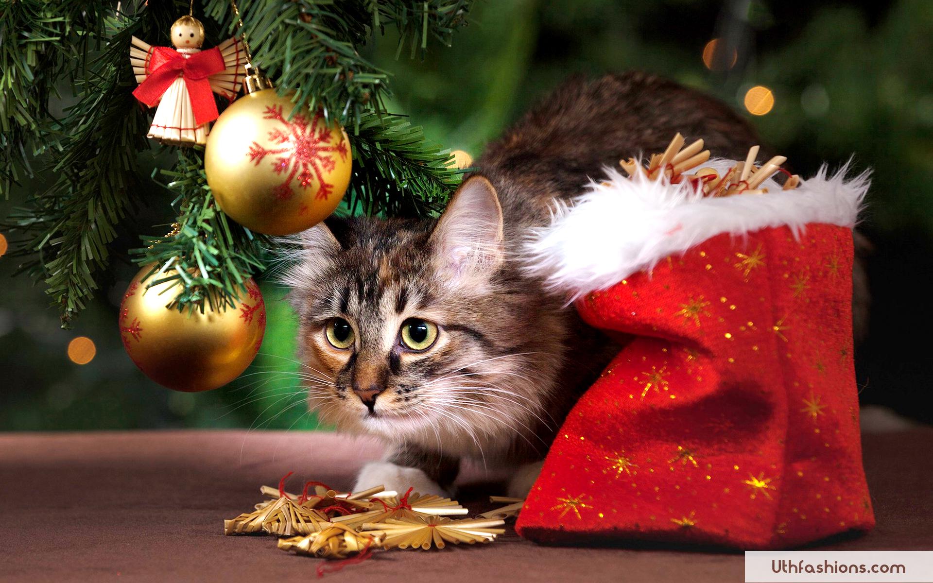 Christmas Cat Wallpaper Hd