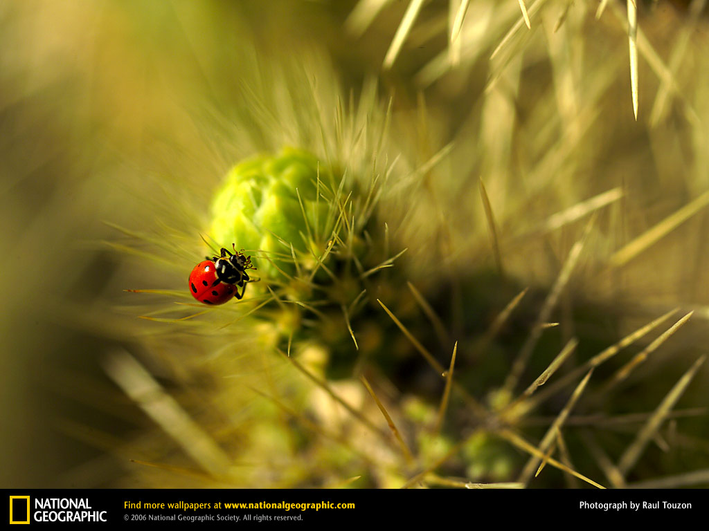 National Geographic Wallpaper Download