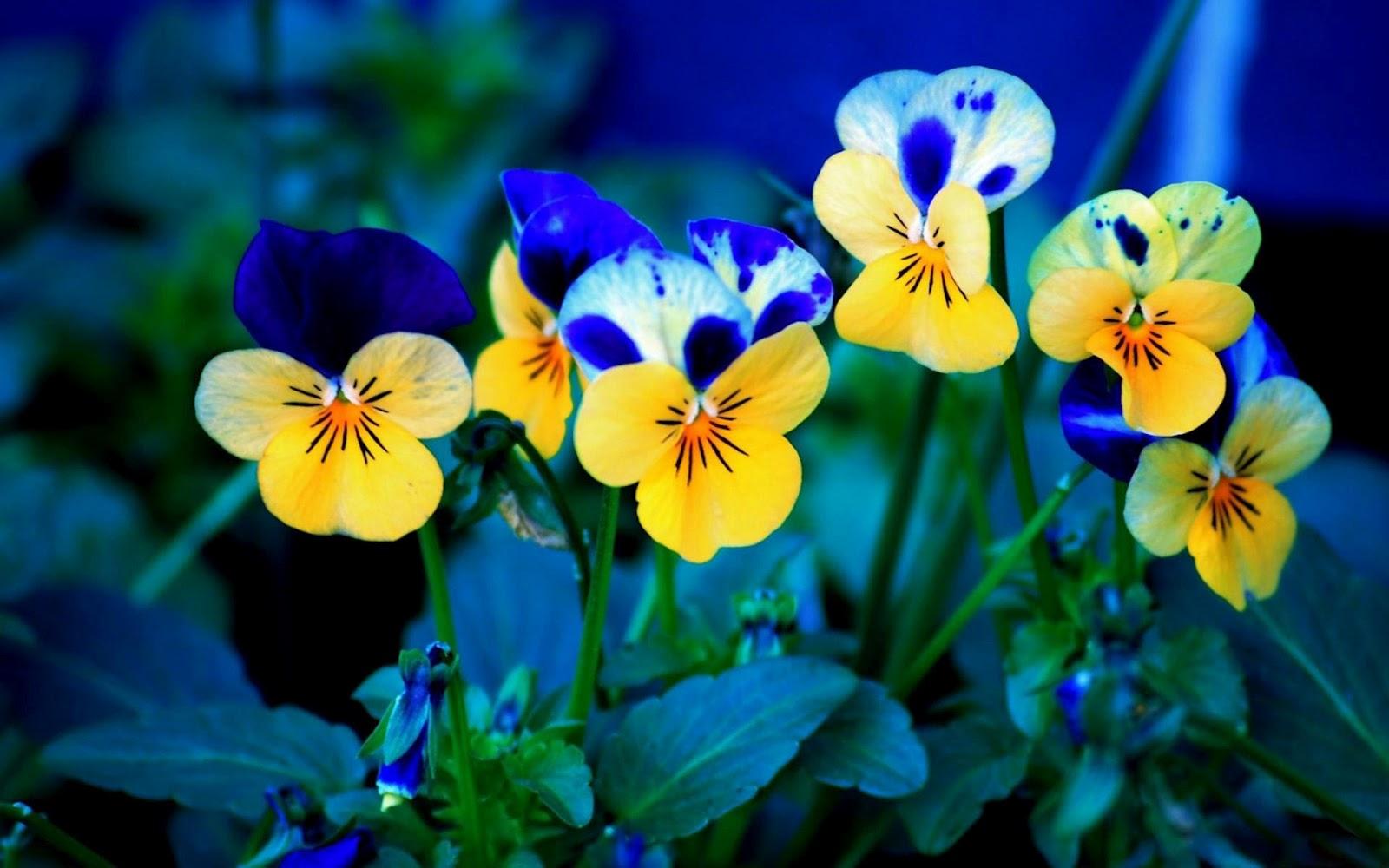 Beautiful Nature Wallpaper Flowers Wallpapersafari