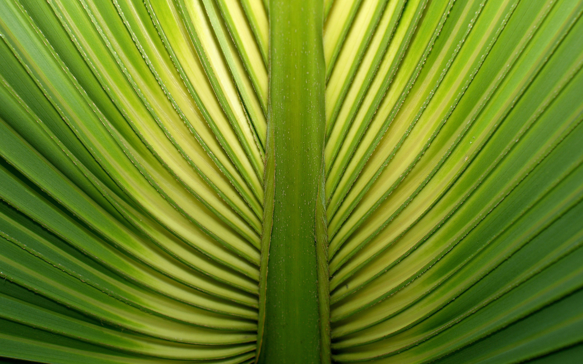 Palm tree leaf Widescreen Wallpaper   8928 1920x1200