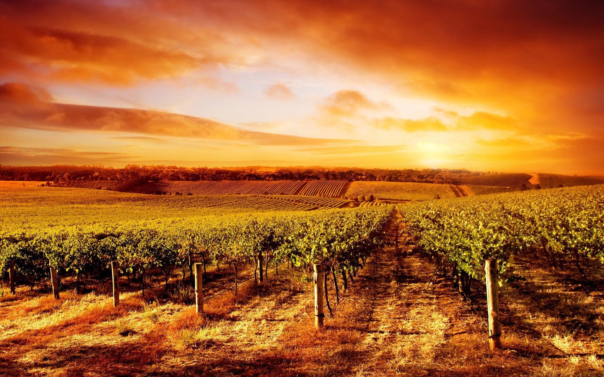 vineyard garden wallpaper desktop 6686 wallpaper high resolution