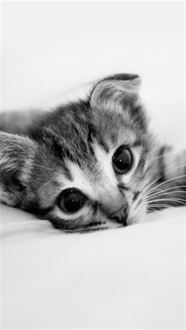 Cute Cat Iphone Wallpaper Wallpapersafari