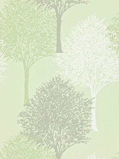 Bold Wallpaper 400x534