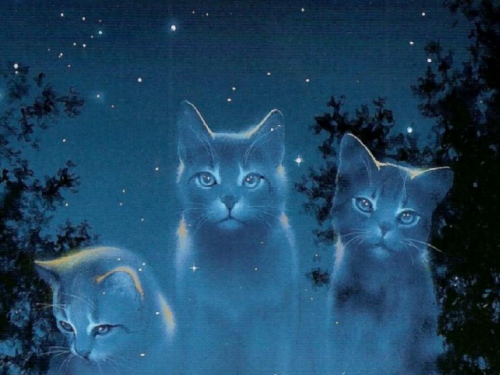 starclan cats   Warriors Novel Series Wallpaper 31827214 1024x768