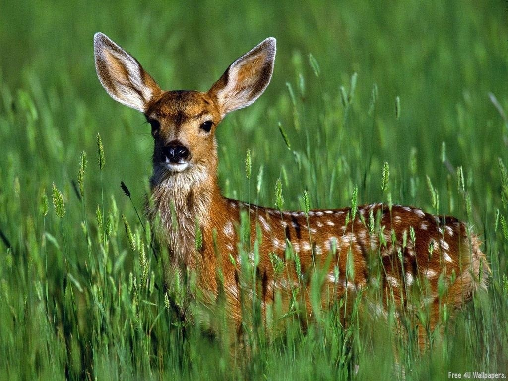 Download Wallpapers Wild Animals Wallpapers 1024x768