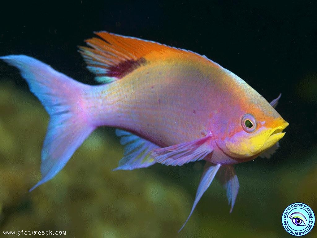 View Colourful Fish Picture Wallpaper in 1024x768 Resolution 1024x768