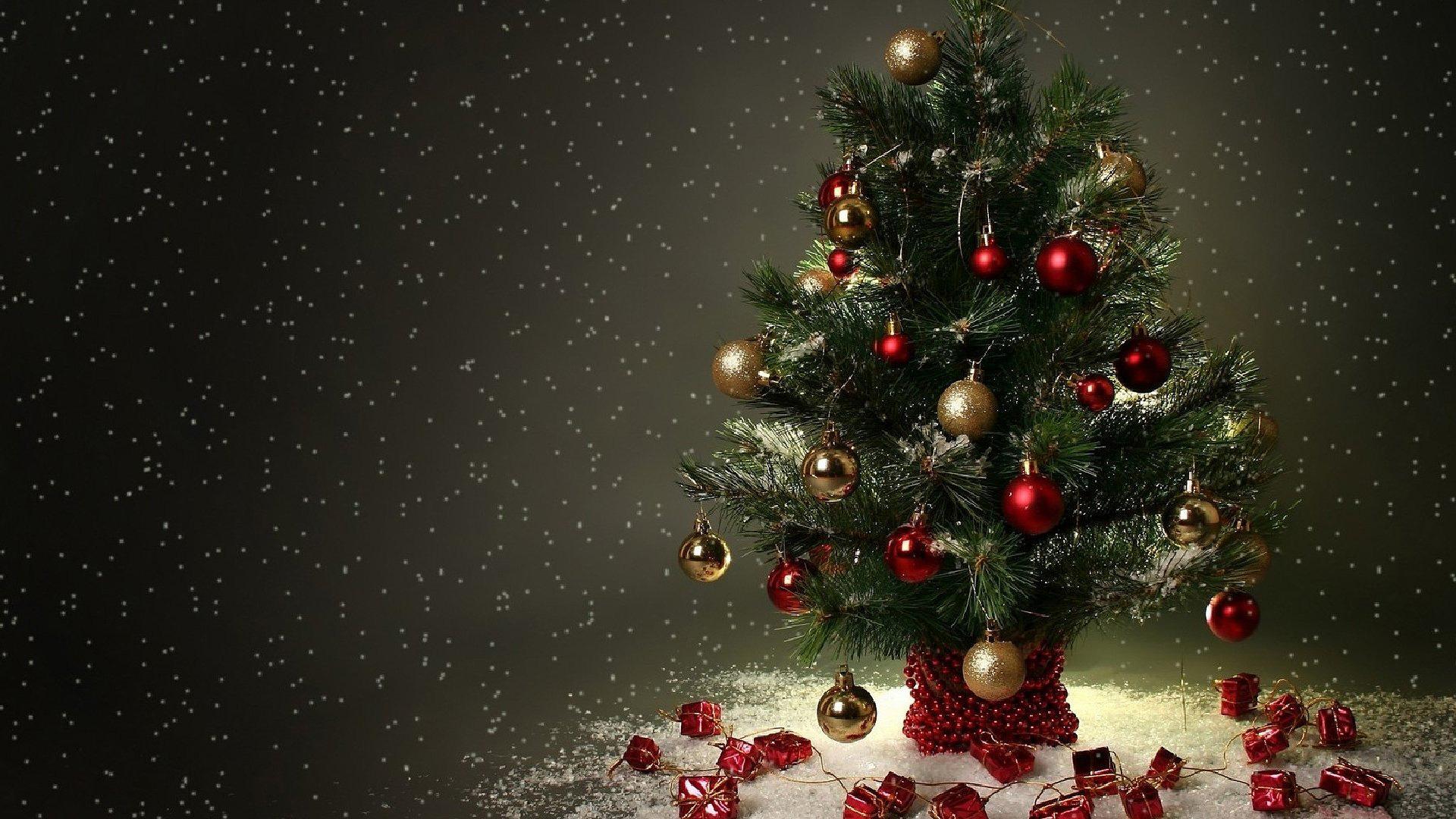 Little Christmas Tree   1920x1080   169 1920x1080