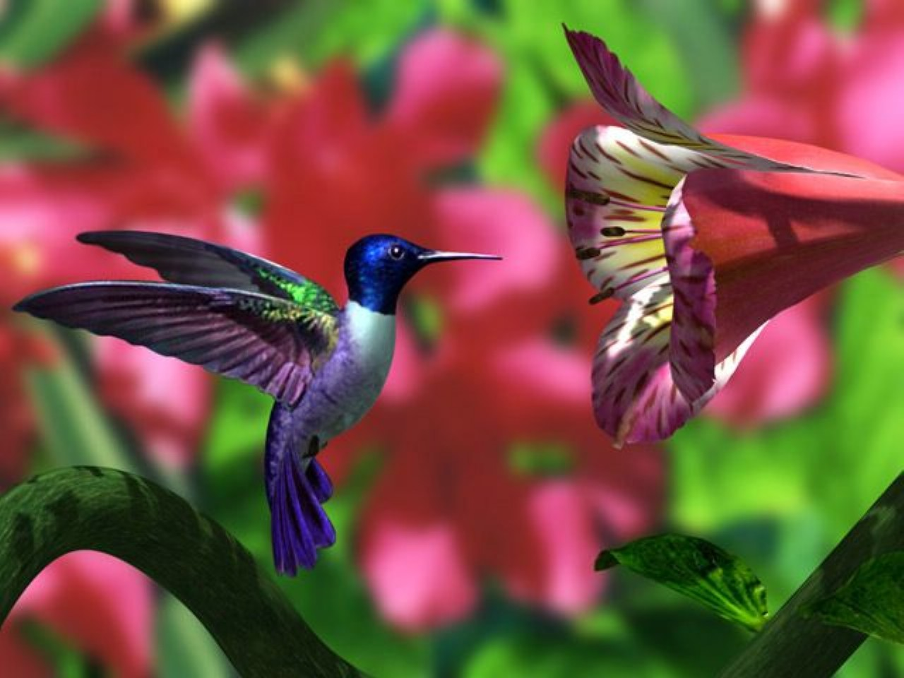 Download Free Hummingbird Wallpapers: Hummingbird Wallpapers