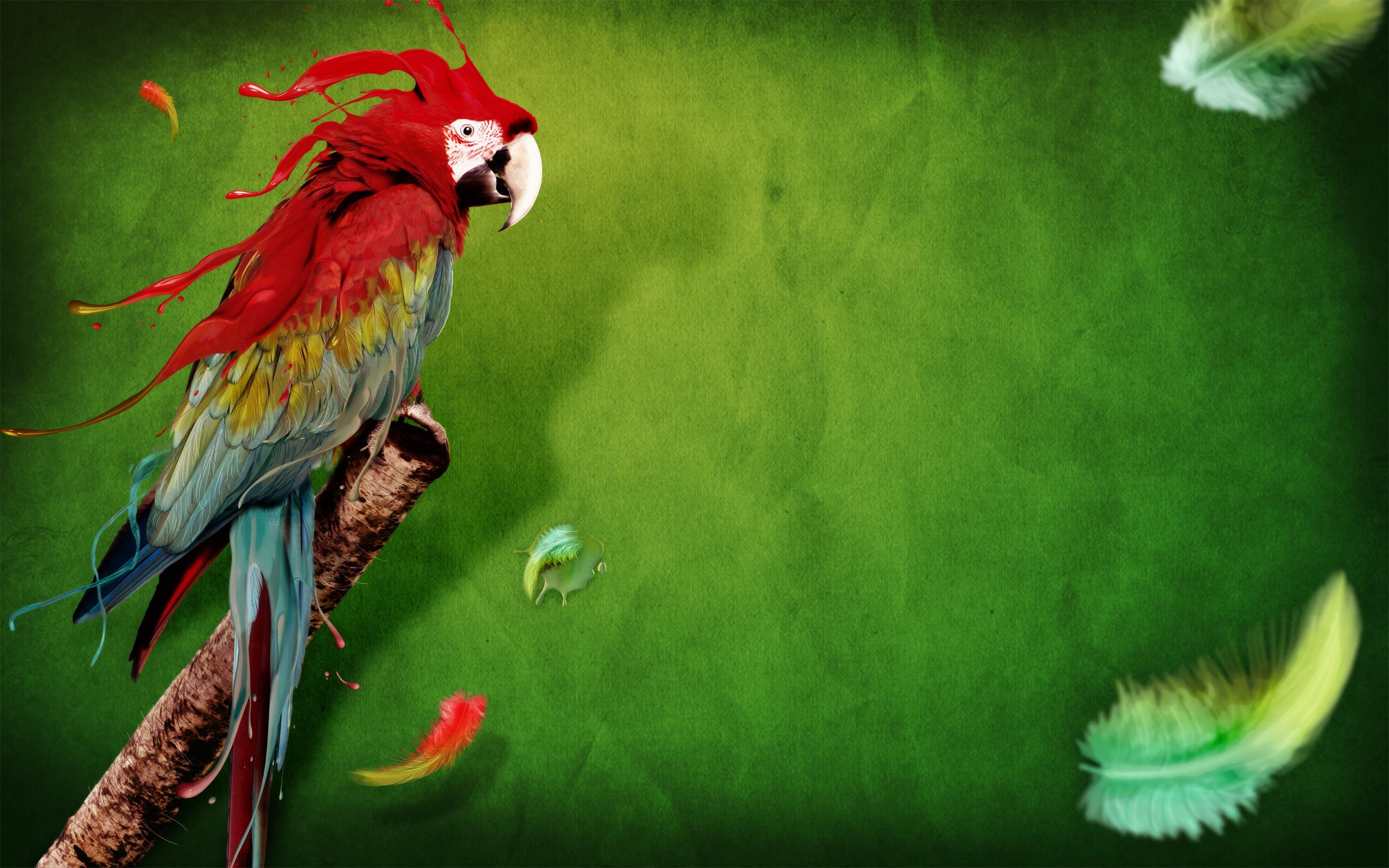 hd parrot wallpaper wallpapersafari